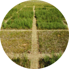 Planejamento e Análise de Experimentos com o R (APV 7037)
